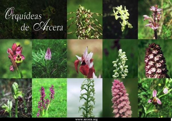 WEB-cartel-orquideas
