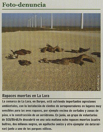 FOTO DENUNCIA RAPACES MUERTAS EN LA LORA jpg