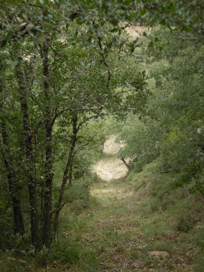 LIMPIEZA DEL CAMINO A LA FÁBRICA | Arcera - Cantabria