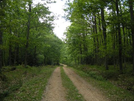 bosque-de-albar