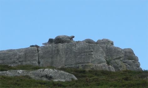 galapago-de-piedra